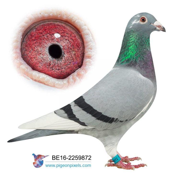 Pigeons Lofts For Sale