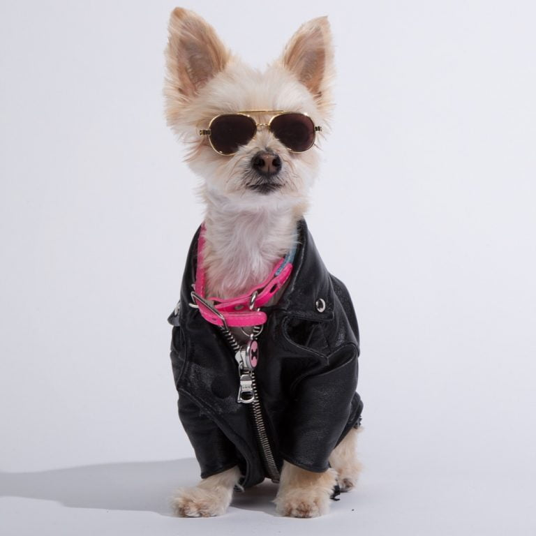 Best Dog Harness Review Uk