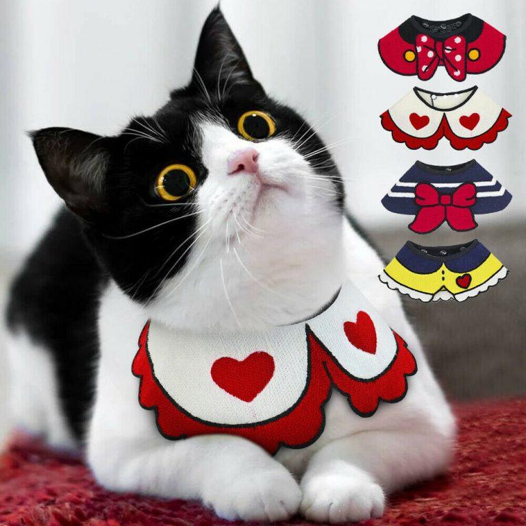 Cat Paper Collar