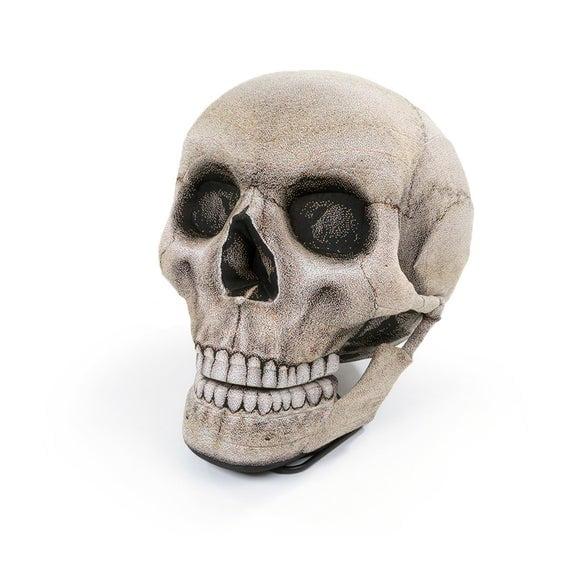 Childs Skull