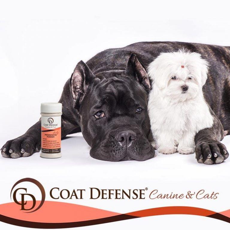 Mite Bites On Dogs