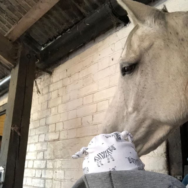 Horse Riding In London Cheap