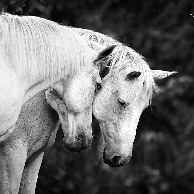 Horses For Long Term Loan