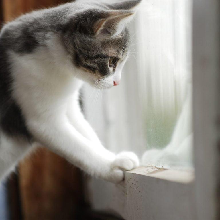 Is It Cruel To Keep Cats Indoors