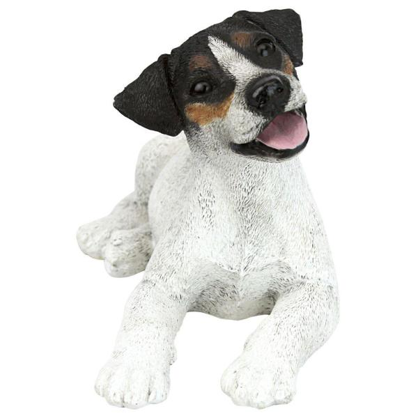 White Jack Russell Terrier