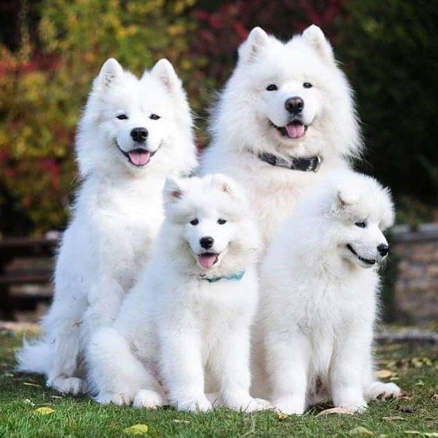 James Forrest Dog