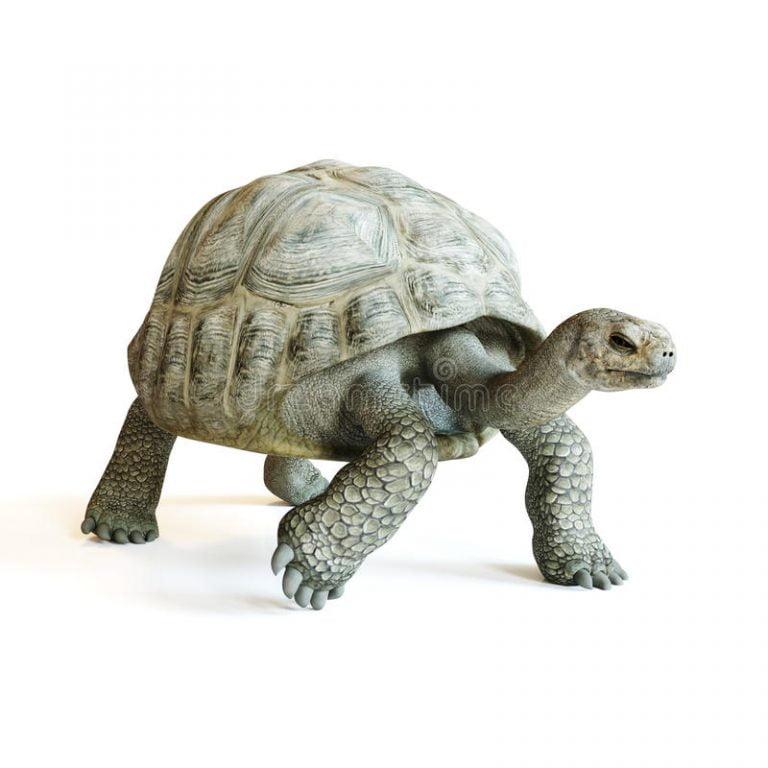 Tortoise Table Food