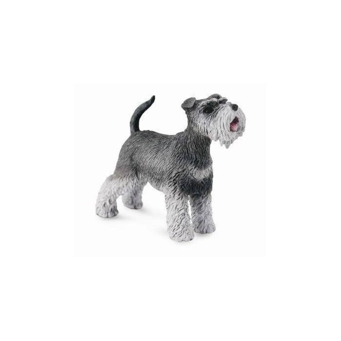 Miniature Schnauzer Puppies Information