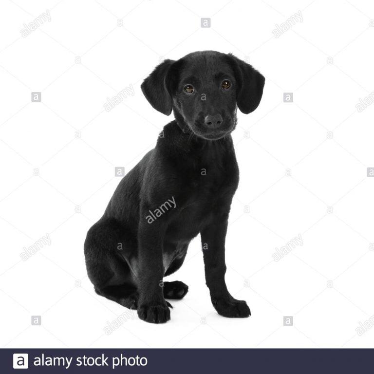 Patterdale Border Terrier Cross Temperament