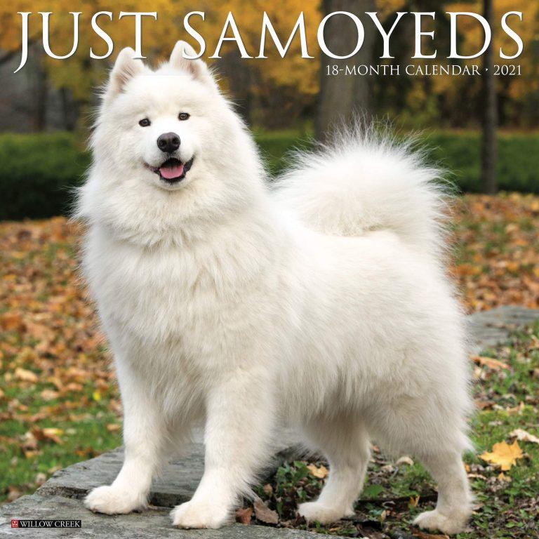 White Russian Dog