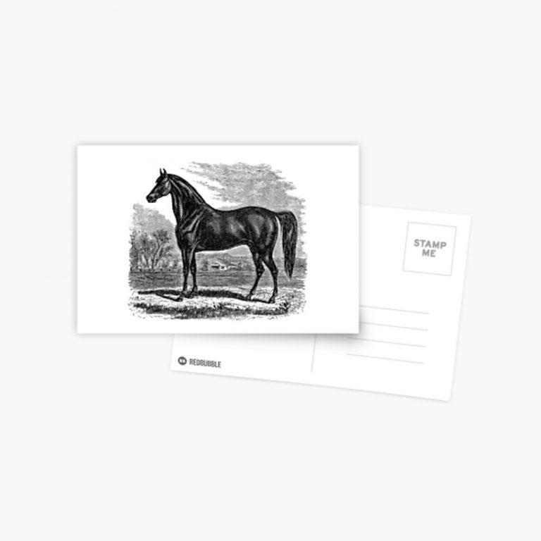 Morgan-Horse