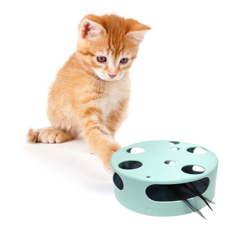 Cat Pate